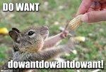 do-want-squirell.jpg