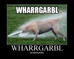 whargarrbl.jpg
